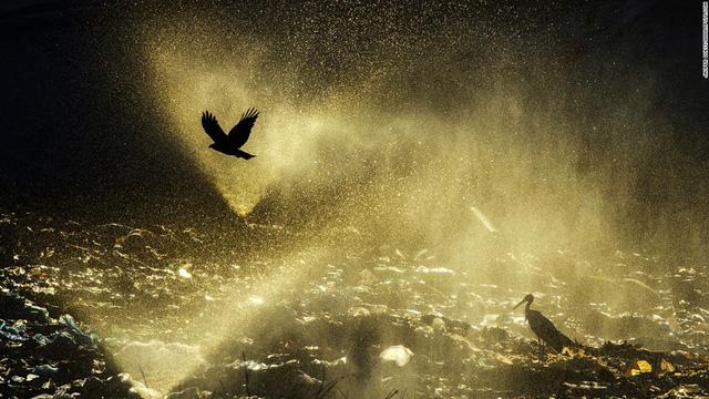 Một nhiếp ảnh gia người Đức khác là Jasper Doest cũng có tác phẩm chụp thế giới tự nhiên đáng chú ý.