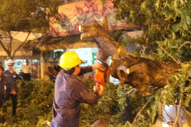 Công ty TNHH MTV công viên cây xanh TPHCMtiến hành cắt cây, thu dọn hiện trường