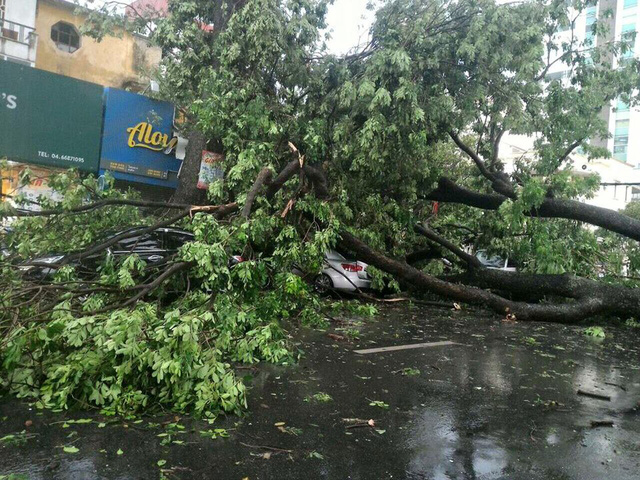 Nhiều chiếc ô tô đỗ trên phố Trần Hưng Đạo đã bị cây xanh đè trúng (Ảnh: Facebook Thùy Chi Nguyễn)