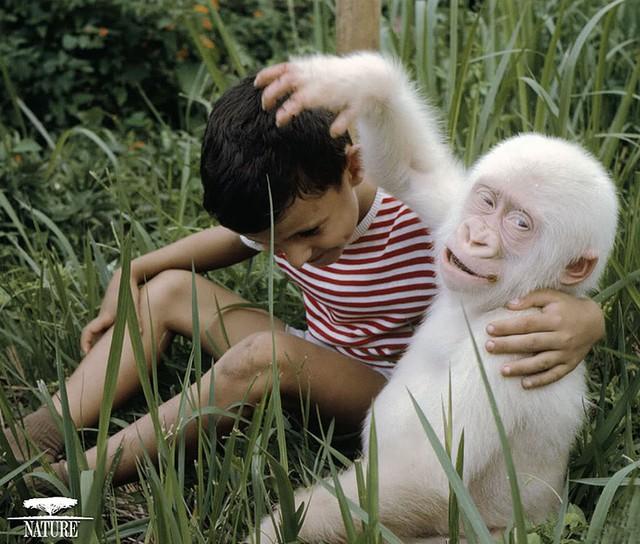Một cậu bé thích thú với chú gorillaz màu trắng.