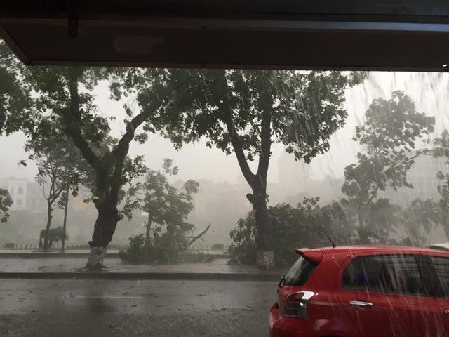 Không lâu sau đó, trời đã đổ mưa kèm theo gió lớn, quật ngã nhiều cây xanh trên đường phố Hà Nội