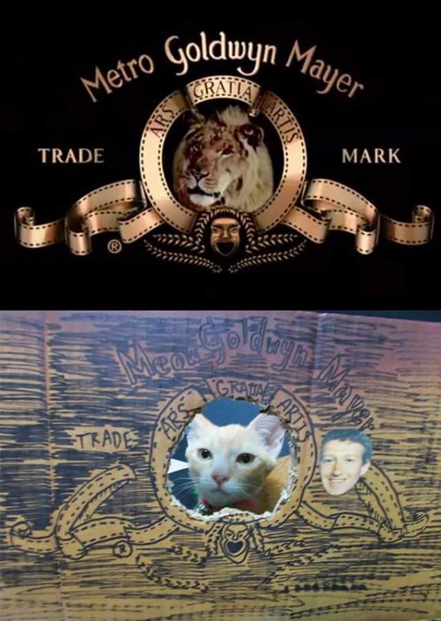 Thậm chí cả chú mèo cũng được Cosplay