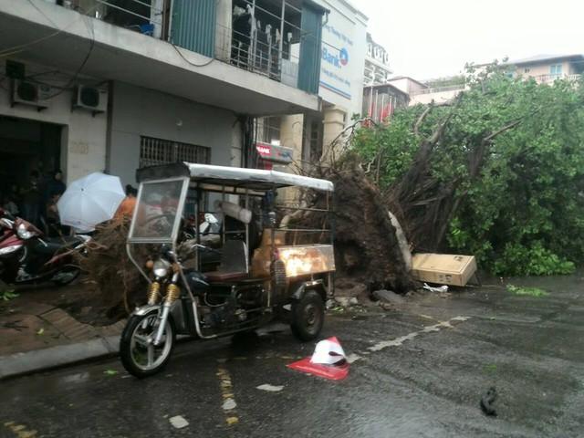 Hình ảnh cây bật gốc trên tuyến phố Trần Hưng Đạo (Facebook: Thùy Chi Nguyễn)