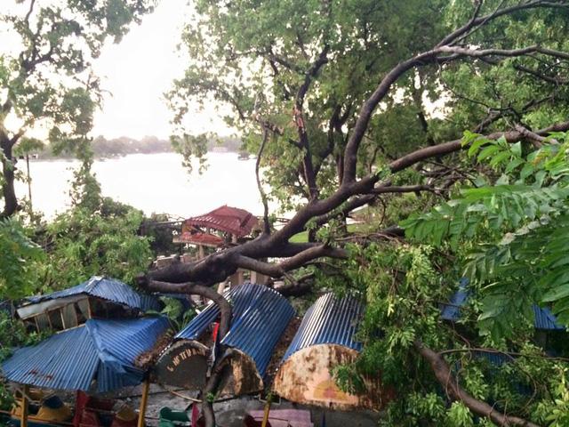 Một cây cổ thụ tại công viên Lê Nin bị đổ và đè bẹp nhiều mái tôn bên dưới