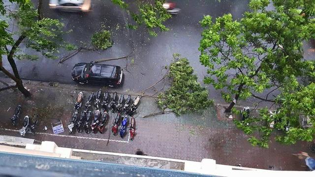 Cành cây la liệt các con phố Hà Nội