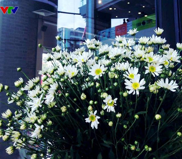 Nếu như mùa hè thường bắt đầu bằng những đóa sen hồng rực, mùi hoa sữa nồng nàn trở thành thương hiệu thu Hà Nội thì cúc họa mi xinh xắn, mỏng manh thường là loài hoa gọi mùa đông về.