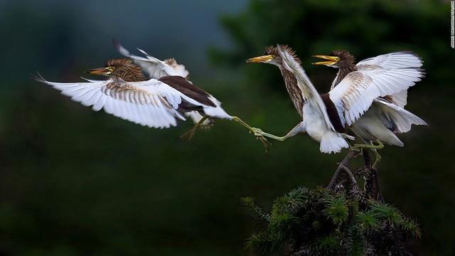 Một nhiếp ảnh gia khác của Trung Quốc - Jianhui Liao - cũng có tác phẩm lọt top 20.
