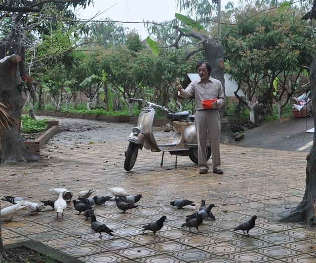 ...nuôi chim bồ câu.