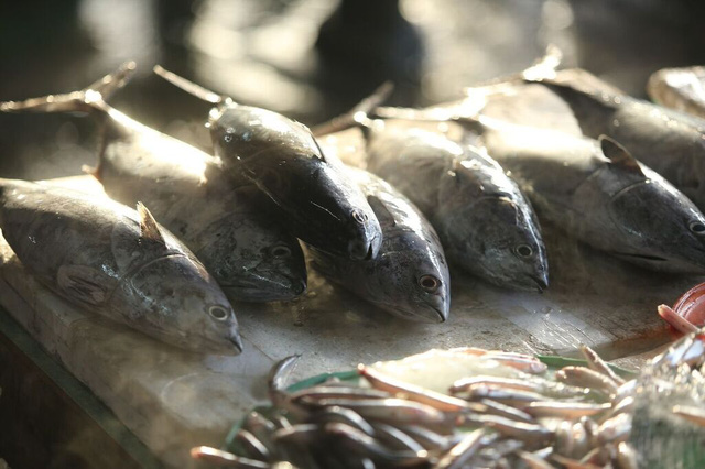 Hàng tôm hàng cá chợ Hội An vào lúc bình minh