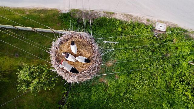 Bức ảnh chụp tổ chim ở trên cao tại Ba Lan
