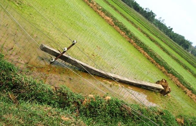 Mưa lớn kèm theo lốc đã làm gãy đổ hàng trăm cột điện hạ thế tại huyện lúa Yên Thành.