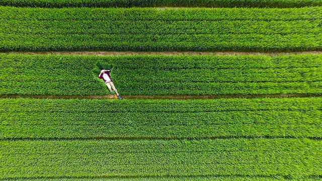 Bức ảnh ấn tượng ở một cánh đồng tại Trung Quốc