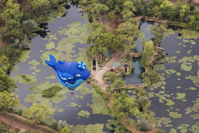 Một chú cá heo xanh bay lượn trên bầu trời.