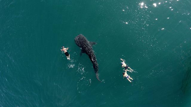 Một bức ảnh chụp cá voi và du khách nhìn từ trên cao