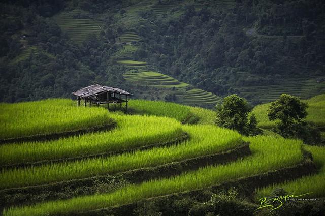Ruộng bậc thang ở Hà Giang
