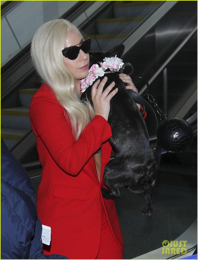 Cô dắt theo chú cún cưng, một giống chó nổi tiếng châu Á.