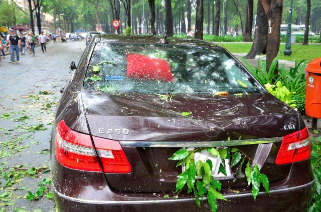 Chiếc ô tô bị bẹp đầu do cây gãy rơi trúng. (Ảnh: Đời sống & Pháp luật)
