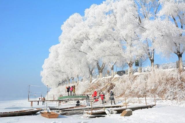 Những cây liễu bị đóng băng đã khiến khung cảnh dọc bờ sông trở nên vô cùng huyền ảo. (Nguồn: CCTV)
