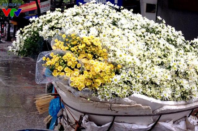 Cúc họa mi trắng muốt, tinh khôi, điểm thêm nét dịu dàng cho phố phường Hà Nội.