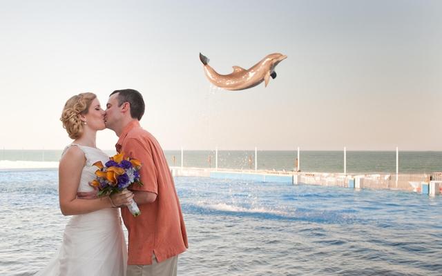 Một cặp đôi tổ chức đám cưới ở Florida đã được một chú cá heo góp mặt trong tấm ảnh cưới độc đáo.