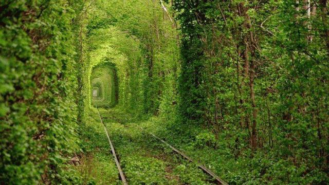 Đường hầm Kleven ở Ukraine còn có tên gọi là Đường hầm Tình Yêu bởi khung cảnh lãng mạn, với cây cối phủ kín xung quanh.