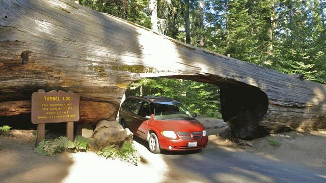 Đi trên con đường Crescent Meadow ở Công viên Quốc gia Sequoia tại California (Mỹ), du khách sẽ được qua một đường hầm cây độc đáo.