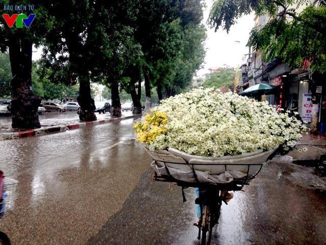 Có thể tìm những chiếc xe đạp chở cúc họa mi tại rất nhiều con phố, đặc biệt là tại các chợ, đường Láng, Yên Phụ, Nghi Tàm...