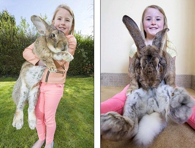 Cháu gái bà Edwards rất thích chơi đùa với những chú thỏ cỡ bự này.