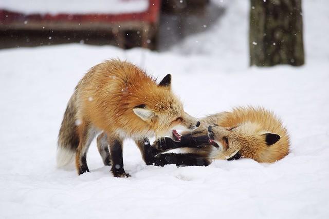 Khoảnh khắc vui đùa bên tuyết.