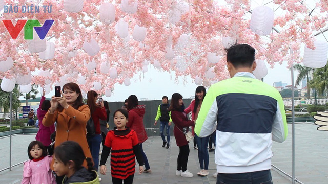 Con đường vòm hoa anh đào là địa điểm chụp ảnh yêu thích của các bạn trẻ