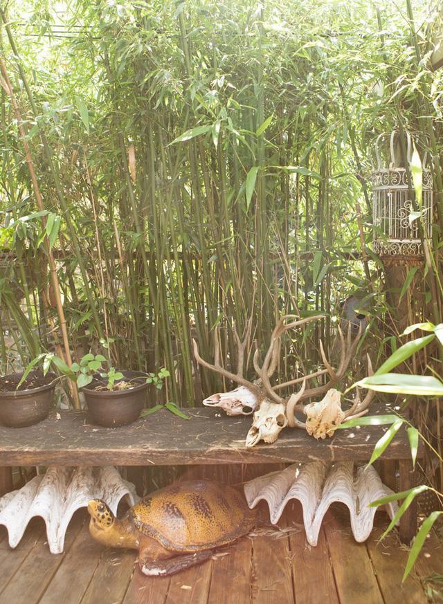 Những hình vỏ sò lớn, rùa biển và hình xương động vật được bày ngoài sân.