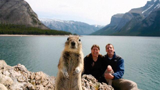 Melissa Brandts và chồng của cô đã ngạc nhiên khi nhận ra một chú sóc đã bất ngờ tạo dáng chung với họ trong tấm hình chụp ở Công viên quốc gia Banff tại Canada vào năm 2009. Ảnh: Melissa Brandts