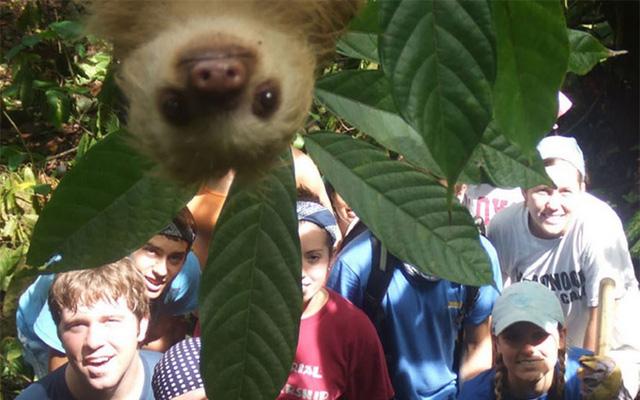 Năm 2012, bức ảnh chụp kỉ niệm của một nhóm sinh viên tình nguyện tại Costa Rica đã được một chú lười viếng thăm vào phút chót. Ảnh: caters