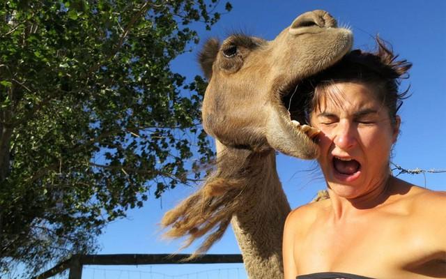 Con lạc đà làm hỏng tấm ảnh selfie của cô gái. Ảnh: Imgur.com