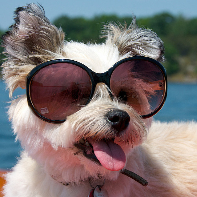 dog with glasses - 682×682