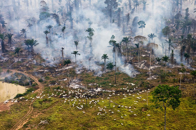Một phần của cánh rừng Amazonia tại Brazil bị đốt cháy và tàn phá.