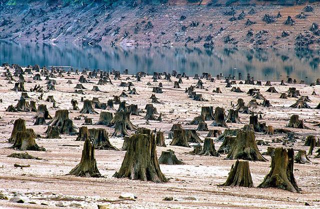 Rừng quốc gia Wilamette ở Oregon (Mỹ) bị chặt phá không thương tiếc. 99% diện tích rừng bị hủy hoại.