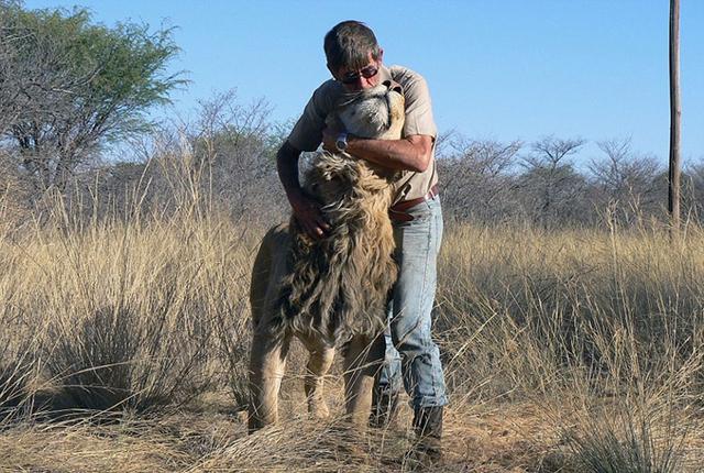 Frikki dành trọn niềm tin cho chú sư tử được coi là hiền lành này.