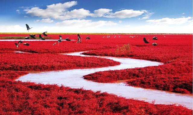 16. Biển Đỏ ở Panjin, Trung Quốc