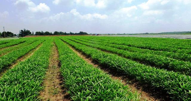Sản phẩm của VinEco đáp ứng tối đa các yêu cầu về an toàn vệ sinh thực phẩm cũng như hàm lượng dinh dưỡng. (Ảnh: Dân trí)