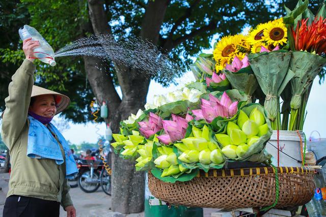 Sen đầu mùa có giá dao động từ 50-100 ngàn đồng/chục bông. Mùi hương thanh khiết, sắc hồng phơn phớt khiến cho mùa hè trở nên mát mẻ, dịu dàng. (Ảnh: Minh Sơn/Vietnam+)