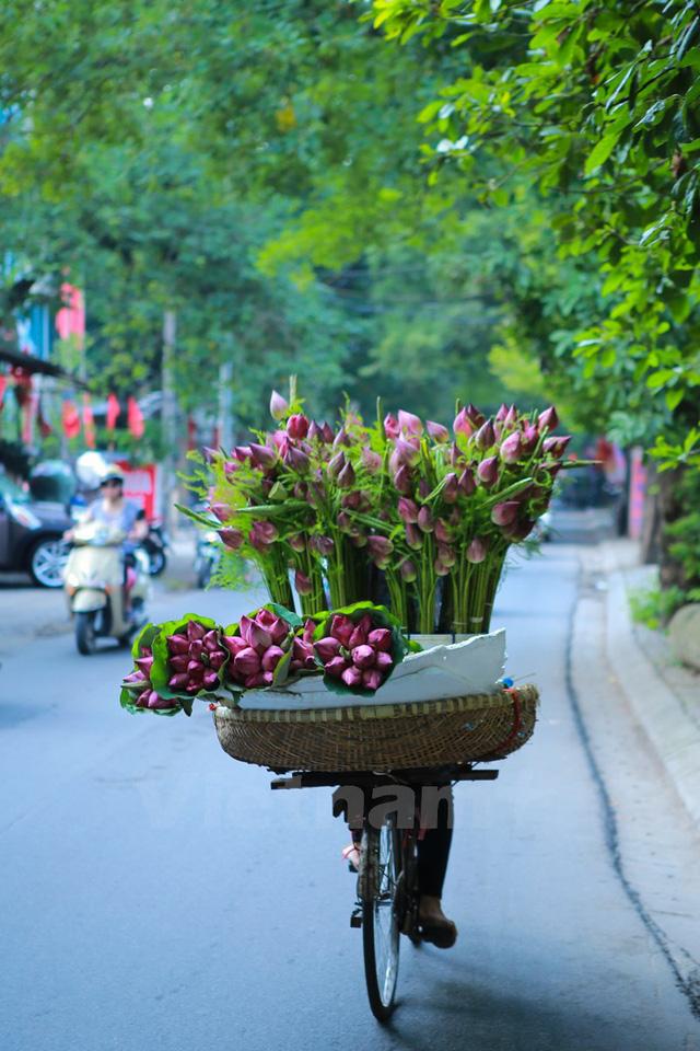 Khi nhìn những xe chờ đầy hoa sen thế này, mỗi người trong ta đều cảm thấy nhẹ nhàng, bình yên đến lạ. (Ảnh: Minh Sơn/Vietnam+)