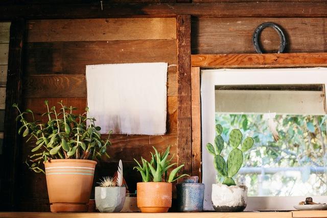 Những chậu cây xinh xắn là vật dụng không thể thiếu trong căn nhà.