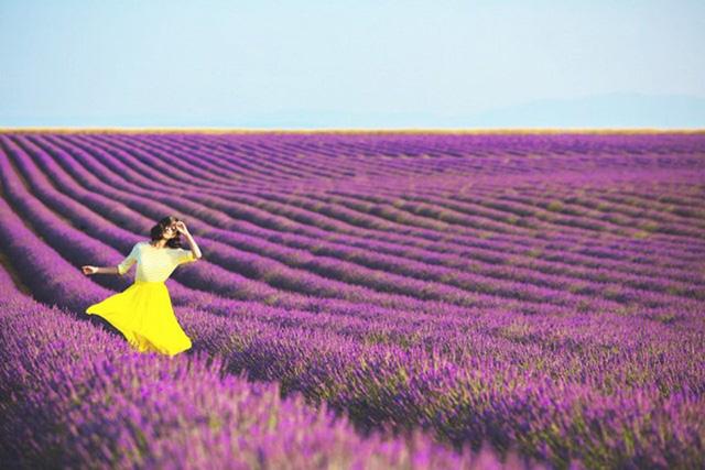 Những cánh đồng hoa oải hương thơm ngát của Provence nở rộ từ khoảng tháng 6 đến tháng 8 hằng năm. Như một biển sắc tím, những cánh đồng hoa oải hương tạo ra không gian tuyệt vời, một cảnh tượng thiên nhiên vừa sặc sỡ màu sắc vừa tràn ngập hương thơm. Hãy tới đây, khép đôi mắt lại và hít cho căng tràn lồng ngực.