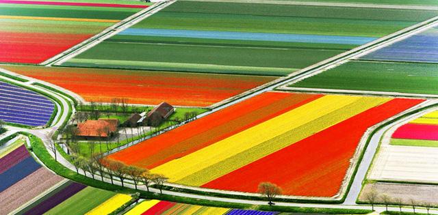 Vào mùa Xuân, những cánh đồng ở Hà Lan tràn ngập sắc màu của những luống hoa tulip, thủy tiên và lục bình nở rộ tạo nên những mảng màu sắc tuyệt đẹp.