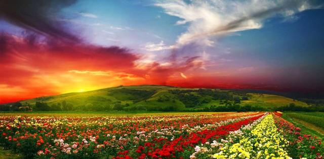 Thung lũng hoa ở Công viên Quốc gia Ấn Độ là một khu vực thuộc Di sản thiên nhiên thế giới. Những thung lũng hoa rực rỡ đối lập với vẻ đẹp hoang dã của cảnh quan dãy Himalaya kỳ vĩ tạo nên cảnh quan tuyệt đẹp nơi đây, đặc biệt vào lúc hoàng hôn.