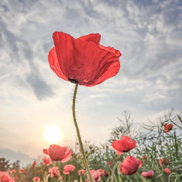 Giải nhất chủ đề hoa