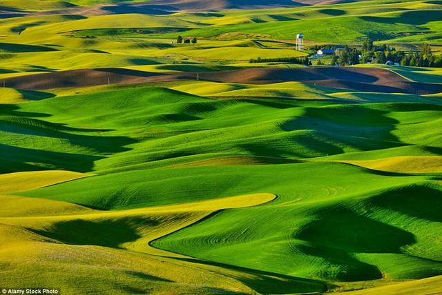 Những ngọn đồi ở bang Washington, Mỹ trông giống như một bức tranh xanh mướt mát.