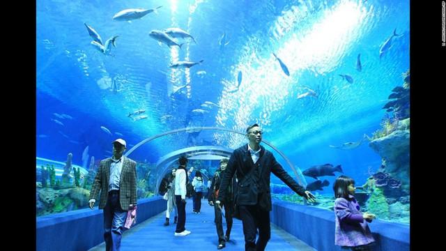 Vương quốc biển Chimelong ở Trung Quốc khiến du khách có cảm giác như đang ở dưới đáy đại dương.
