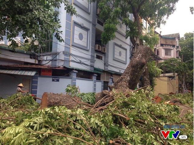 Những cây xà cừ to bị đổ sau cơn bão sỗ 1 tại đường Trần Xuân Soạn đã được cắt tỉa để thông đường. Lực lượng chức năng đã tiến hành cấm đường để đảm bảo an toàn cho việc dọn dẹp cây đổ.